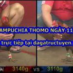 Đá gà Campuchia Thomo ngày 11/11/2020