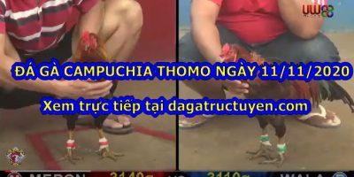 Đá gà Campuchia Thomo