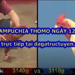 Clip đá gà Campuchia cựa sắt ngày 12/11/2020