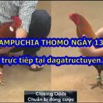 Coi Đá gà Thomo Hay ngày 13/11/2020