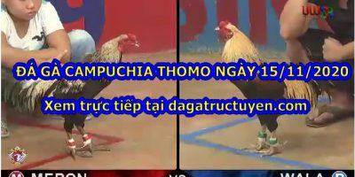 Video gà Thomo