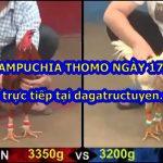 Video gà Campuchia trực tiếp ngày 17/11/2020