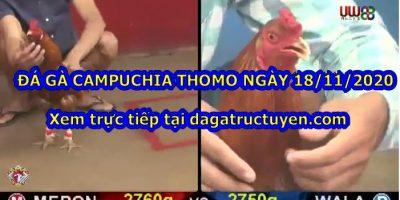 Video gà Campuchia
