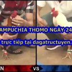 Xem gà đá Thomo Live ngày 24/2/2021