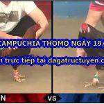 Xem gà đá trường Thomo – Live ngày 19/3/2021