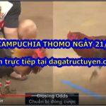 Xem đá gà nòi Thomo ngày 21/3/2021