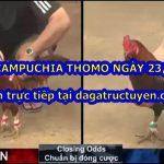 Video đá gà cựa dao Campuchia ngày 23/3/2021