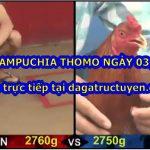Tuyển chọn video gà trường Thomo ngày 3/3/2021