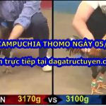 Video chọi gà Bồ 67 – trực tiếp 5/3/2021