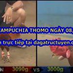 Xem đá gà Campuchia trực tiếp ngày 8/3/2021