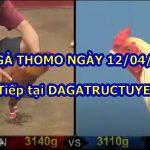 Đá gà trực tiếp Thomo Hôm Nay ngày 12/4/2021