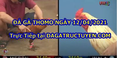 trực tiếp Thomo Hôm Nay