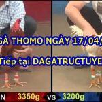 Đá gà nòi Thomo – Trực tiếp ngày 17/4/2021