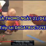 Đá gà Campuchia Casino 999 ngày 21/4/2021