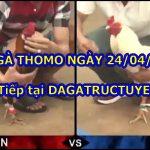 Đá gà Hôm Nay ngày 24/4/2021
