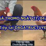 Tổng hợp video gà Hay Nhất ngày 27/4/2021