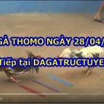 Đá gà Campuchia Thomo cựa sắt ngày 28/4/2021