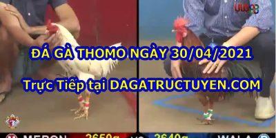 Đá gà Campuchia Bồ 67