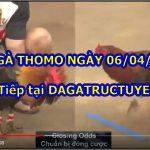 Video gà đá Hôm Nay ngày 6/4/2021