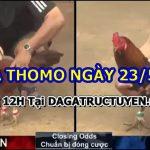 Đá gà Campuchia Hấp dẫn tại Bồ 999 ngày 23/5/2021