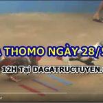 Đá gà nòi cựa sắt tại Thomo trực tiếp 28/5/2021