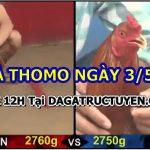 Coi đá gà Campuchia Thomo – 3/5/2021