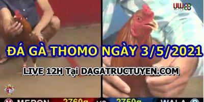 Coi đá gà Campuchia Thomo
