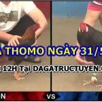 Xem đá gà Campuchia trực tiếp Thomo (31/5/21)