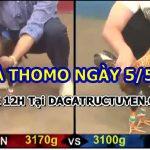 Tổng hợp video gà tại Thomo ngày 5/5/2021