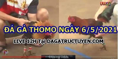 Đá gà Campuchia Hôm Nay