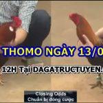 Tổng hợp video gà đặc sắc ngày 13/6/2021