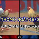Đá gà CAM Thomo – Trực tiếp ngày 16/6/2021