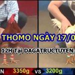 Đá gà 999 Full Video ngày 17/6/2021
