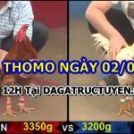 Đá gà Thomo Hôm Nay ngày 2/6/2021