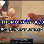 Tổng hợp video gà Campuchia Hôm Nay 6/6/21
