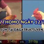 Đá gà cựa sắt hấp dẫn trường Thomo ngày 12/7/21