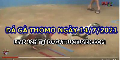 daga-T7-14