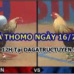 Tuyển tập clip gà Thomo Đặc Sắc ngày 16/7/2021