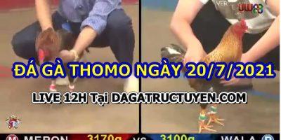 daga-T7-20