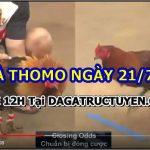 Xem đá gà Mới Nhất từ Thomo – 21/7/2021