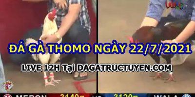 daga-T7-22