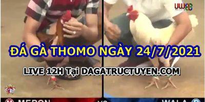 daga-T7-24