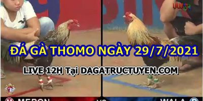 daga-T7-29