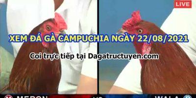 daga-T8-22