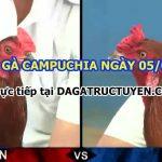 Coi gà đá Gay Cấn từ trường gà Campuchia 5/9/2021
